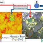 Analisi e monitoraggio della vite e delle uve