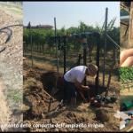Realizzazione dell'impianto di irrigazione