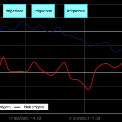 Andamenti di temperatura nella tesi irrigata con nebulizzatori climatizzanti e nella tesi non irrigata, registrati durante la giornata del 1 Agosto